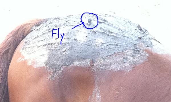 fly spray for horses
