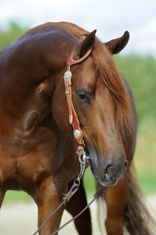 Roxy's Foal