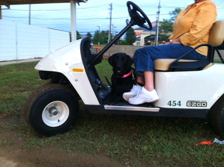 dog on golf cart