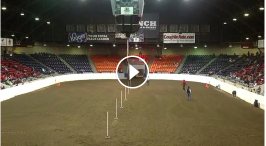 Must Watch-Amazing pole horse