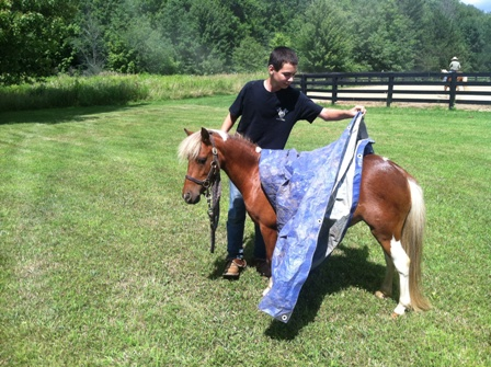 Mini horse with tarp