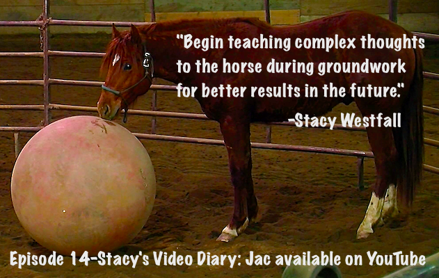 Begin teaching complex thoughts to the horse during groundwork for better results in the future. Stacy Westfall