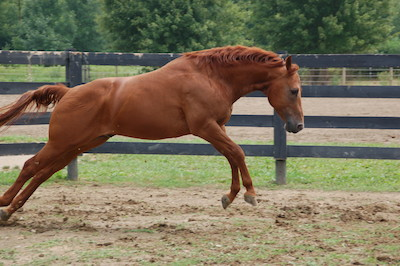 Horse springing like a cat!