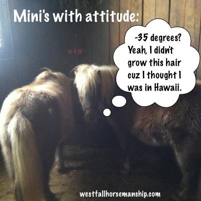 Mini's with attitude