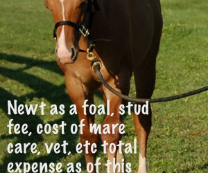 Should I breed my mare: Things to consider before breeding.