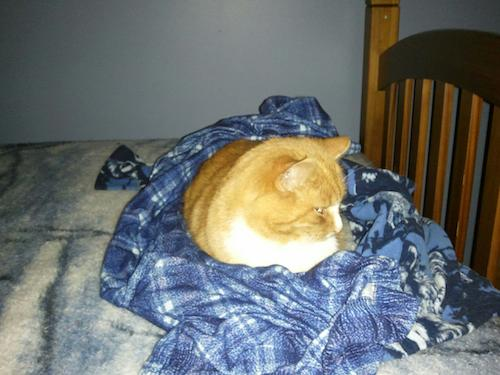 Cat in new place sleeping on old PJ's that smell like the boys....