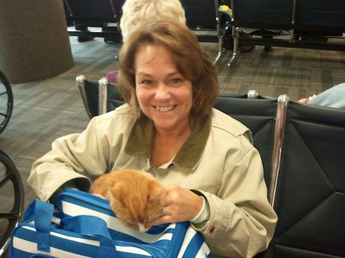 cat during layover
