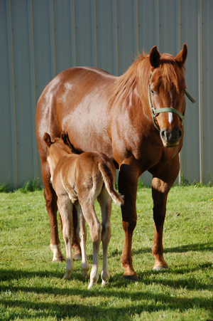Jackie and Lucy, mare and foal