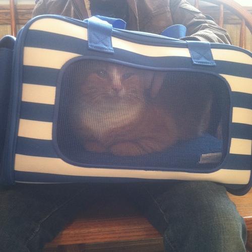 Martha Stewart cat carrier