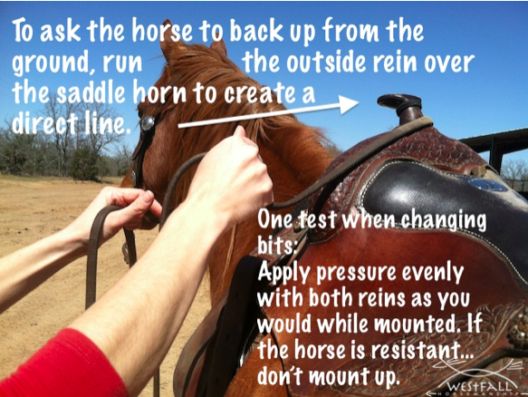 ask horse to back up from ground