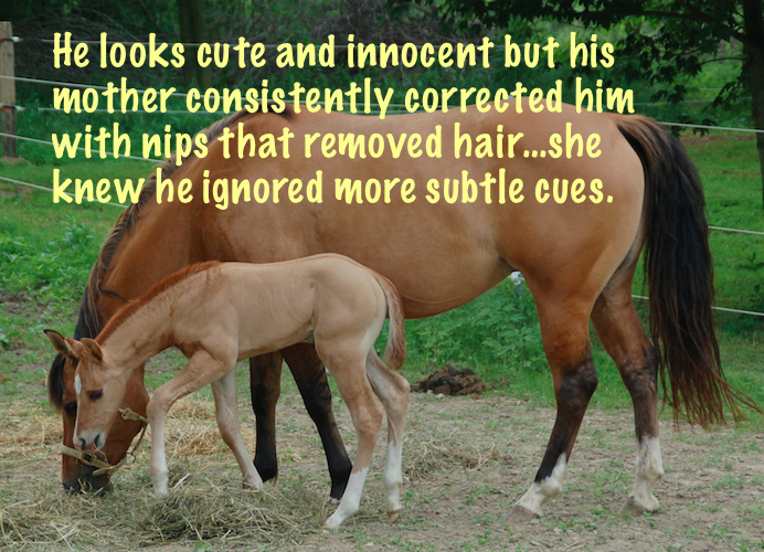 foal ignored subtle cues