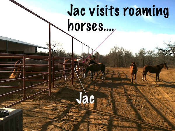 Jac visiting the roaming horses