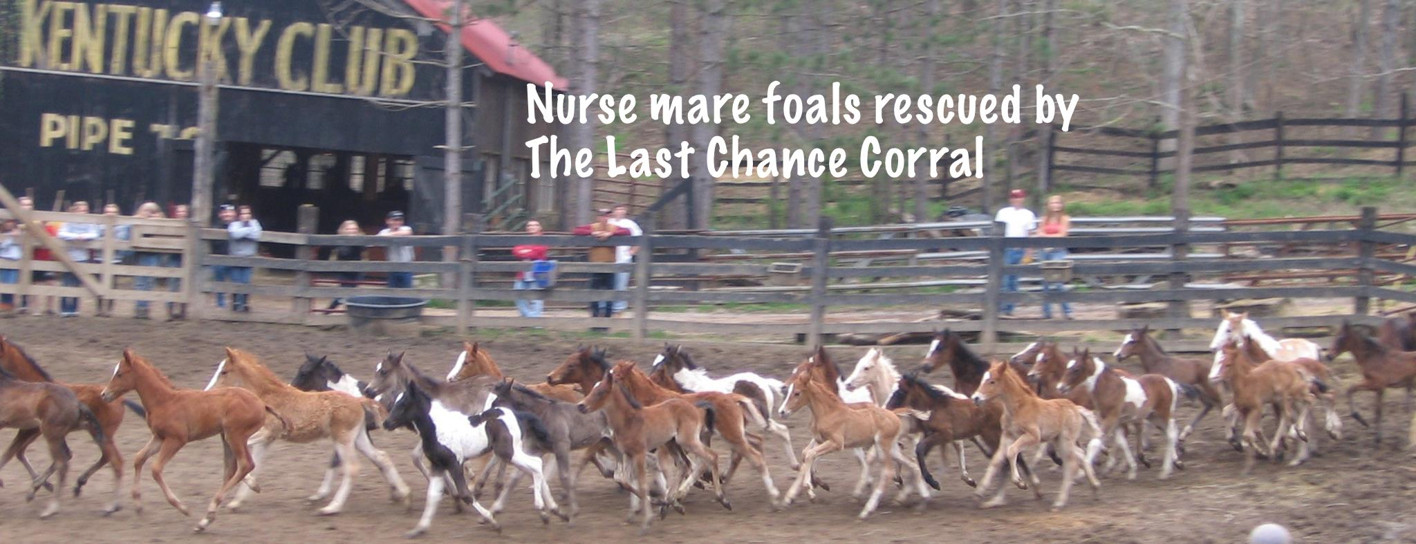 The youngest of the rescues, nurse mare foals, draw the most emotional reaction from people, myself included.