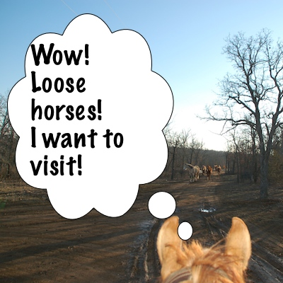Newt visits other horses
