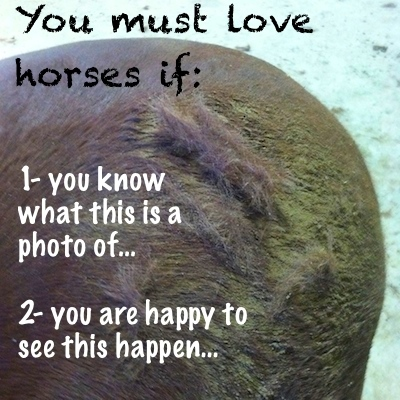 You must love horses if...shedding.