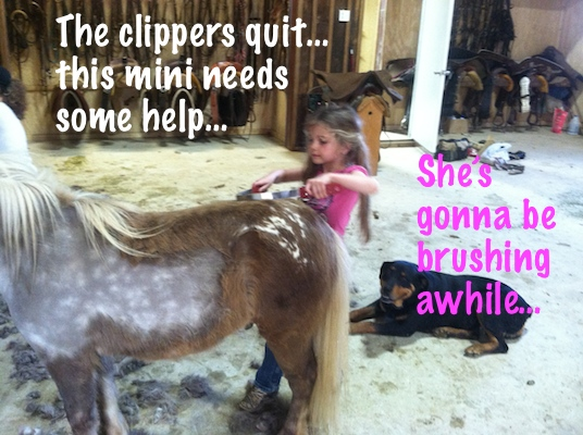 Mini horse being brushed by small girl