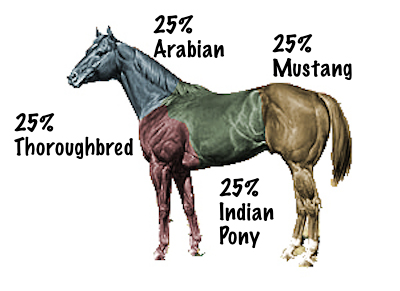 AQHA-what makes up a Quarter Horse?
