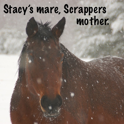 Stacy's mare, Scrapper's mother