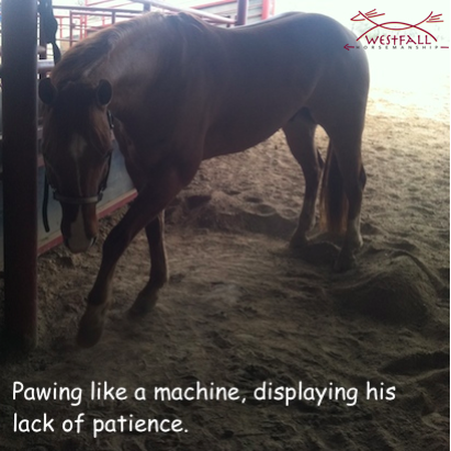 Horse pawing displaying a lack of patience. Digging like a machine!
