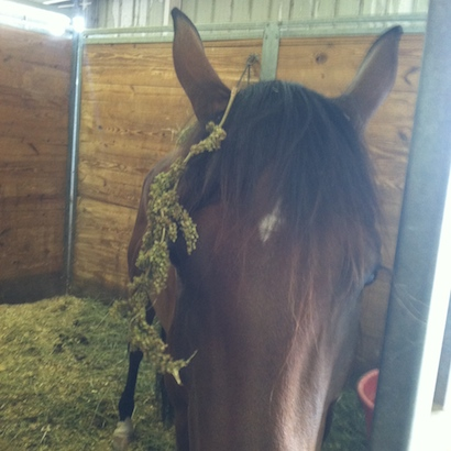 Some horses are naturally clean...others are messy in their stalls.