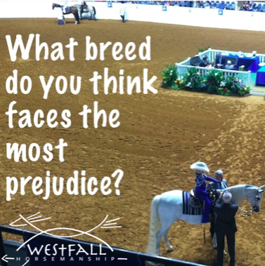 What breed of horse do you think face the greatest prejudice?