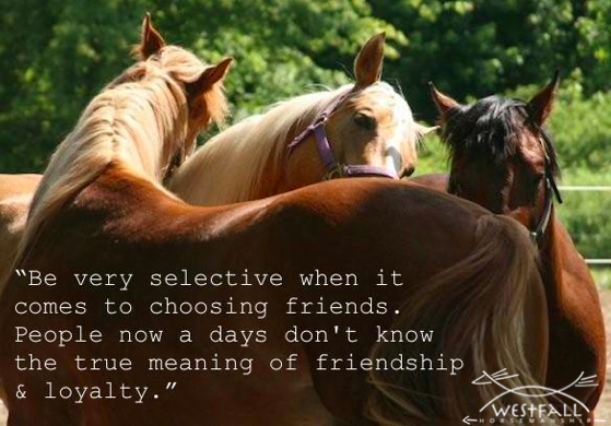 Be very selective when it comes to choosing friends. People now a days don't know the true meaning of friendship & loyalty.
