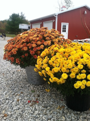 fall decorations for horse barn