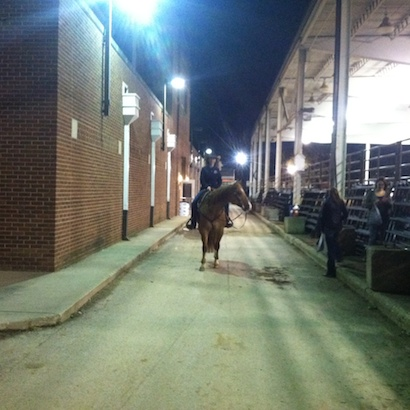 When is the best time to train a horse; Night time training