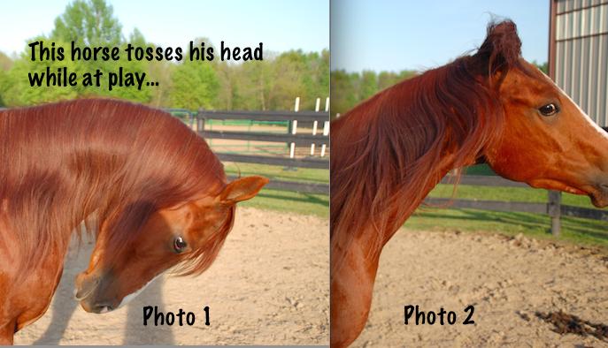 natural head toss