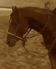 A bosal is not the same as a mechanical hackmore. Click photo to see more bosals.