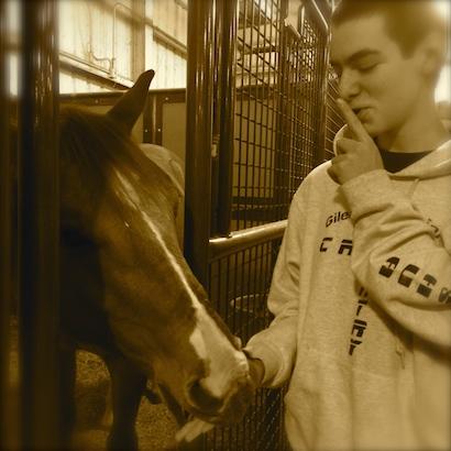 Newt the horse diary