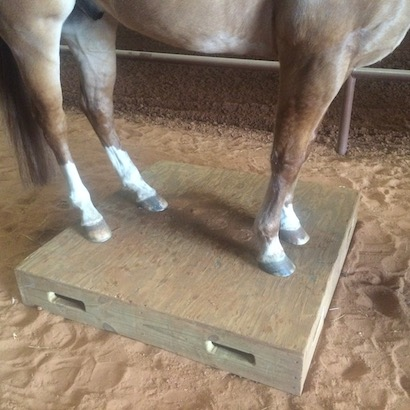 teaching a horse to stand on a box or  pedestal