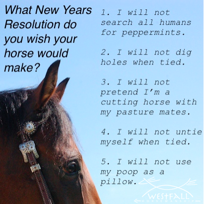 What New Years Resolution do you wish your horse would make?