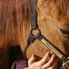 equine massage school
