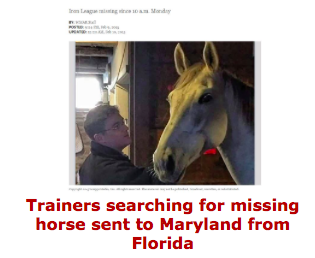 Missing horse in Maryland