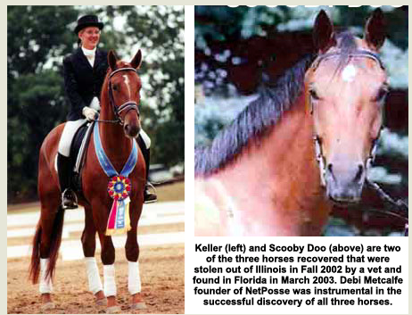 Stolen horse success story