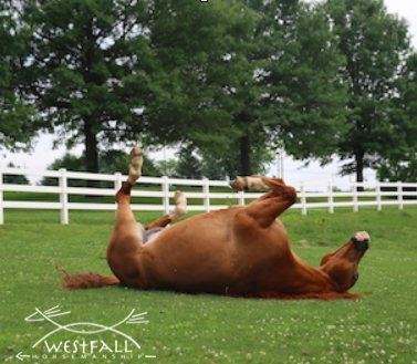 horse rolling in pasture