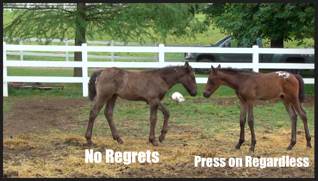 Nurse mare foals Stacy Westfall