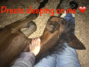Presto sleeping on me