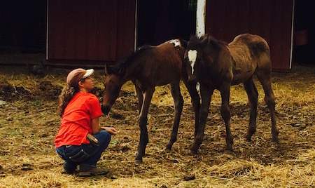 Day 5: Handling the foals and when to halter break