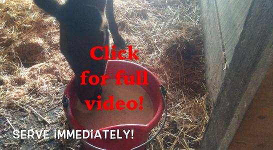 Cute video alert!