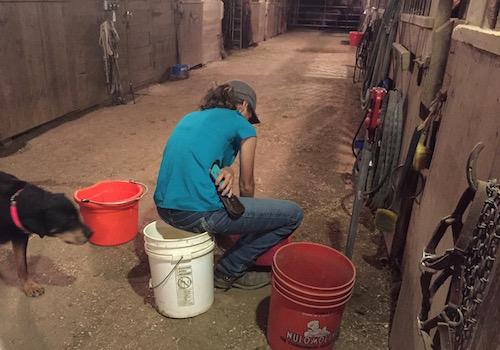 mixing foal milk