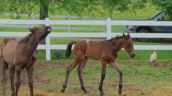 silly foals