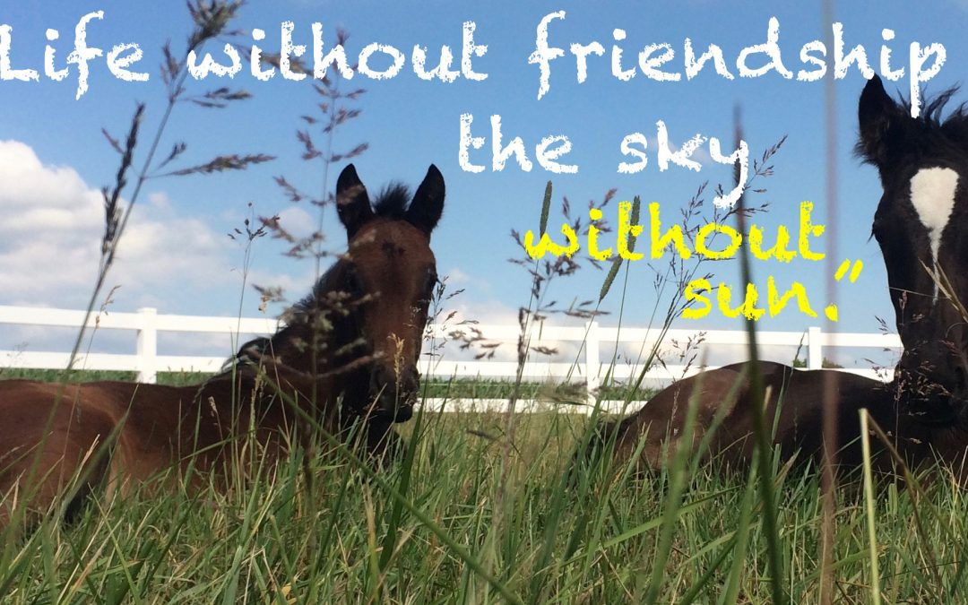 """""""Life without friendship is like the sky without sun."""""""
