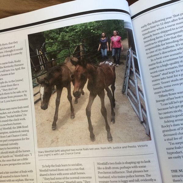 Justice and Presto featured in Western Horseman!