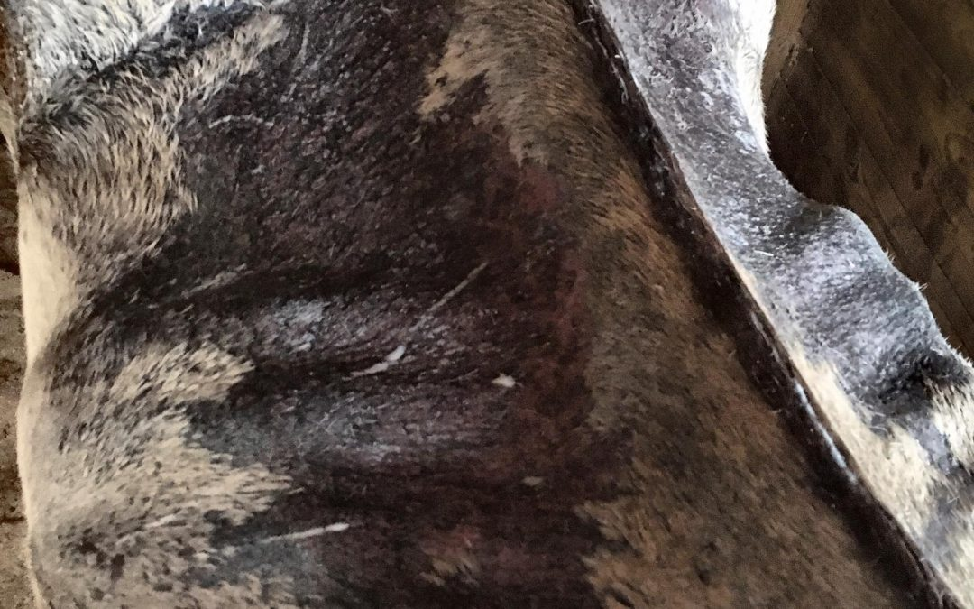 Neglected horse: How does it happen? How can it be prevented?