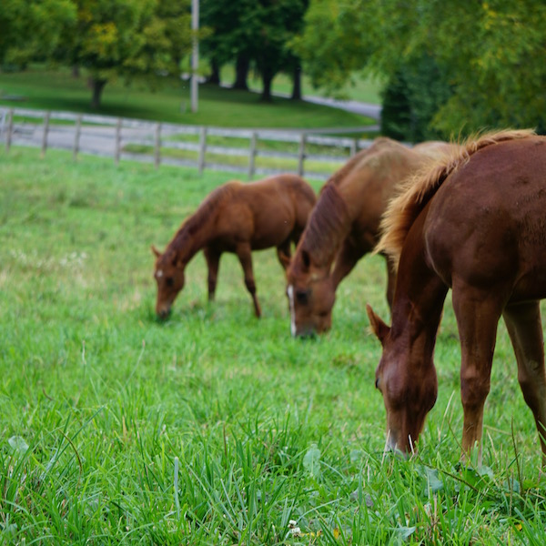 Weaning foals with older horses