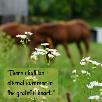 """""""There shall be eternal summer in the grateful heart."""""""