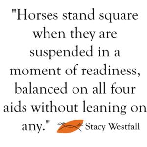 How do you teach a square halt for dressage or western dressage?