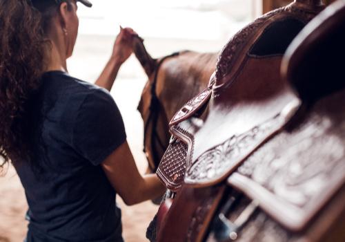 saddle 500x350